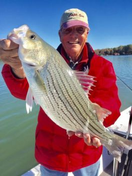 Guide Gus Gustafson said hybrid bass at Lake Norman have become a great fishery, especially from November through January.
