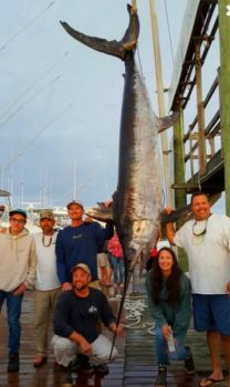 Ryan Keany of Manteo and his crew aboard Horseplay out of Pirate's Cove Marina boated this 528-pound swordfish on Oct. 14 in 180 fathoms of water north of Oregon Inlet.