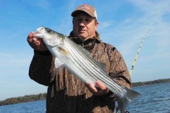 Want to catch a striped bass on a deep-diving crankbait? December is a great month, because fish will be shallow, often schooling with largemouths.