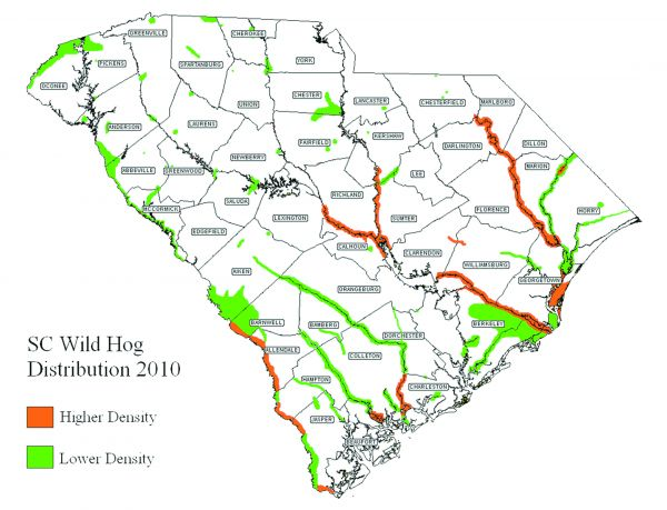 wild hogs cover much of south carolina offering plenty of hunting opportunties